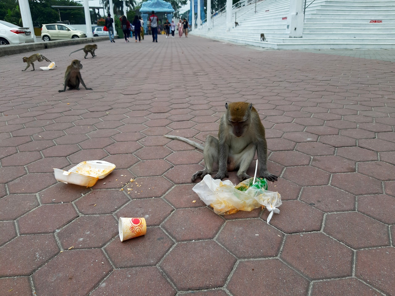 opice s odpadom na námestí